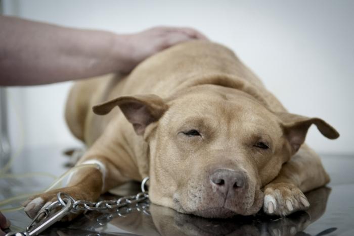 cachorro-foto-ebc